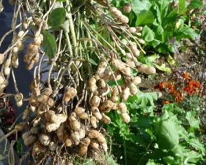 野菜 に 2 月 植える