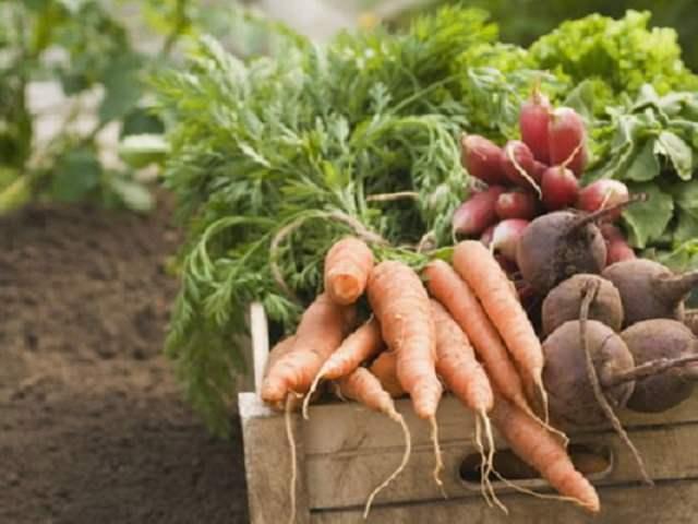 今 植える 野菜