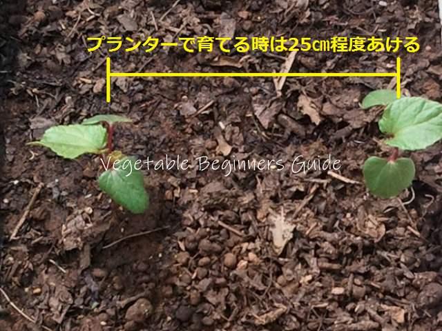 植え オクラ 方 の
