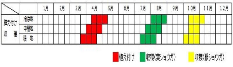 生姜 収穫 時期 生姜の収穫時期はいつ?